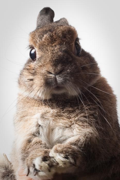 2010, 2-15 Daily Bunny
