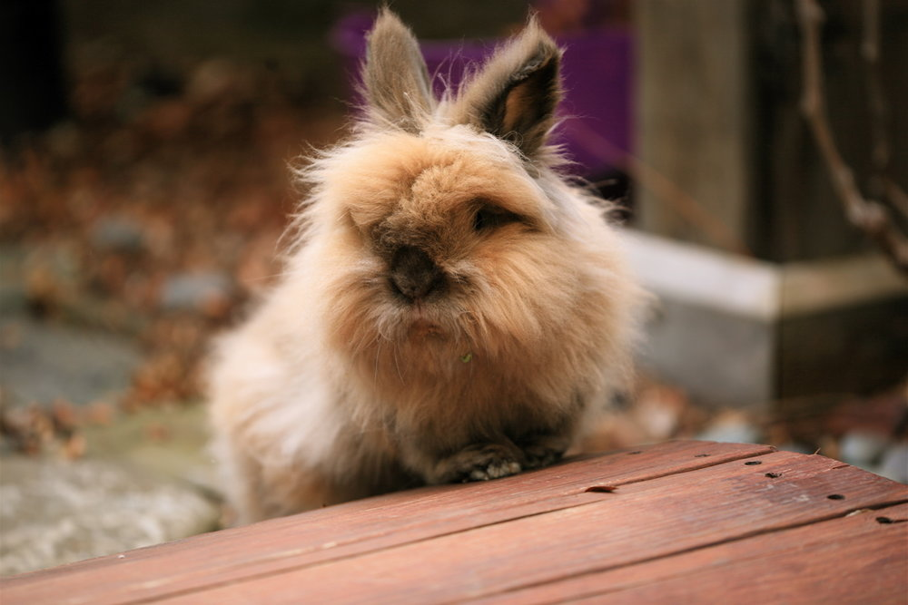 2010, 2-16 Daily Bunny