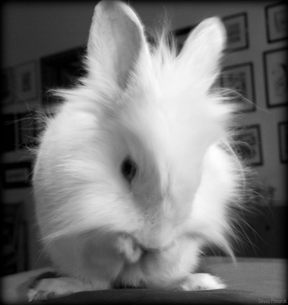 2010, 2-17 Daily Bunny