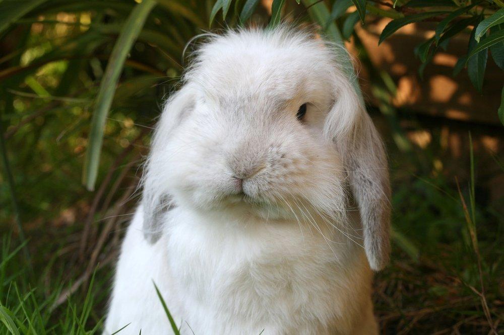 2010, 2-18 Daily Bunny