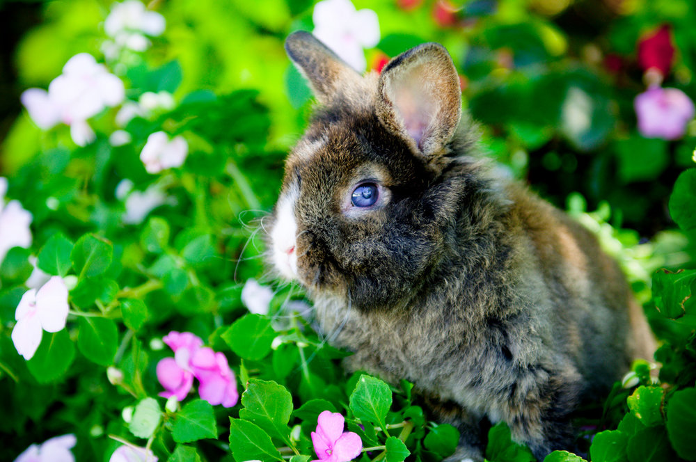 2010, 2-20 Daily Bunny