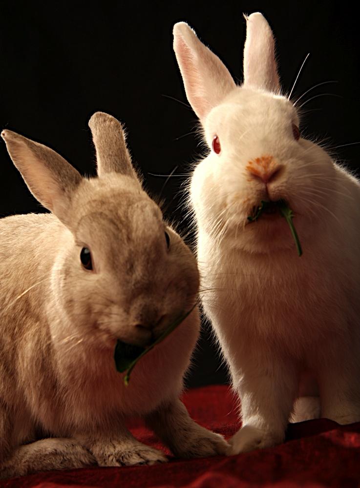 2010, 2-22 Daily Bunny