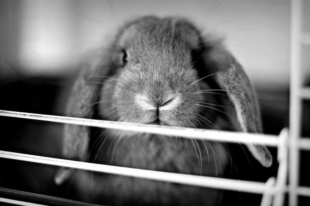 2010, 2-26 Daily Bunny