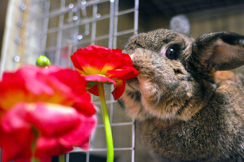 2010, 2-27 Daily Bunny