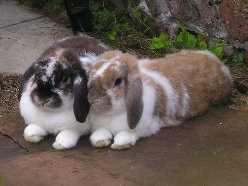 2010, 2-28 Daily Bunny