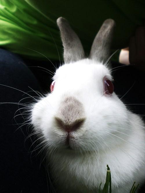 2010, 3-4 Daily Bunny