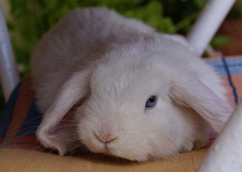 2010, 3-8 Daily Bunny