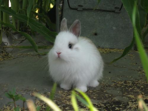 2010, 3-9 Daily Bunny