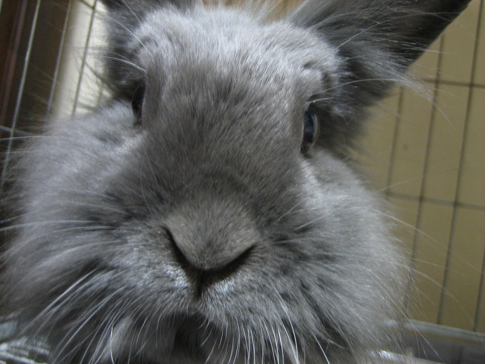 2010, 3-1 Daily Bunny