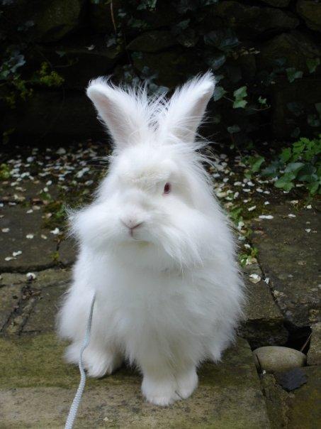 2010, 3-20 Daily Bunny