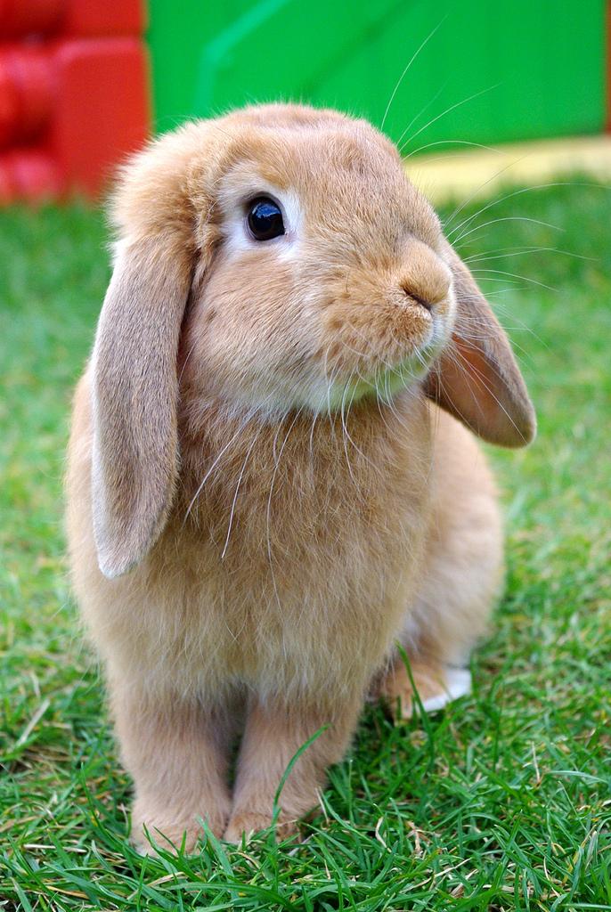 2010, 3-24 Daily Bunny