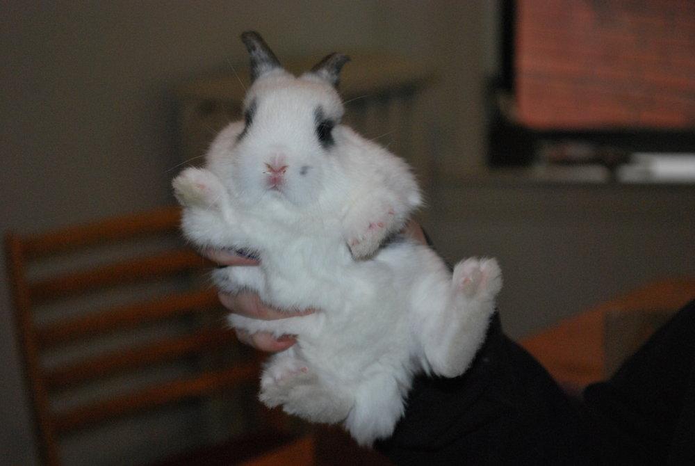 2010, 3-25 Daily Bunny