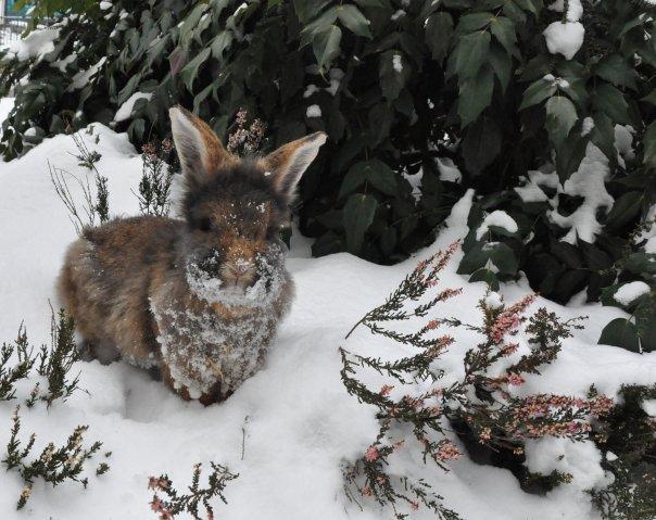 2010, 3-26 Daily Bunny