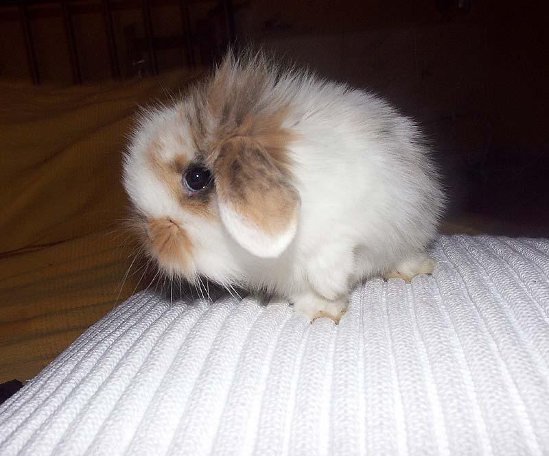 2010, 3-28 Daily Bunny