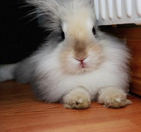 2010, 3-29 Daily Bunny