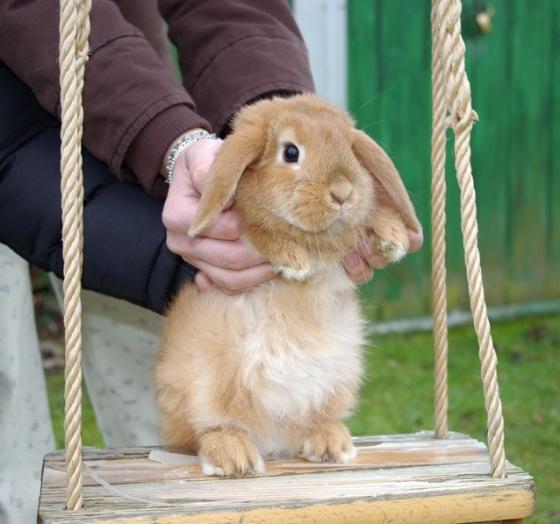 2010, 3-30 Daily Bunny