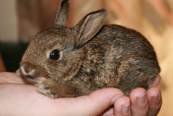 2010, 3-31 Daily Bunny