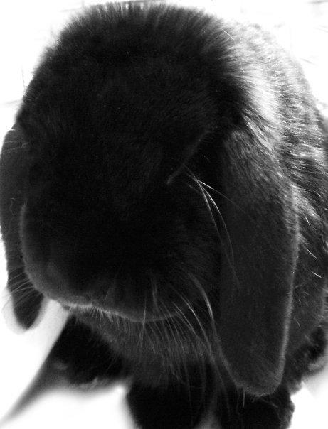 2010, 4-6 Daily Bunny