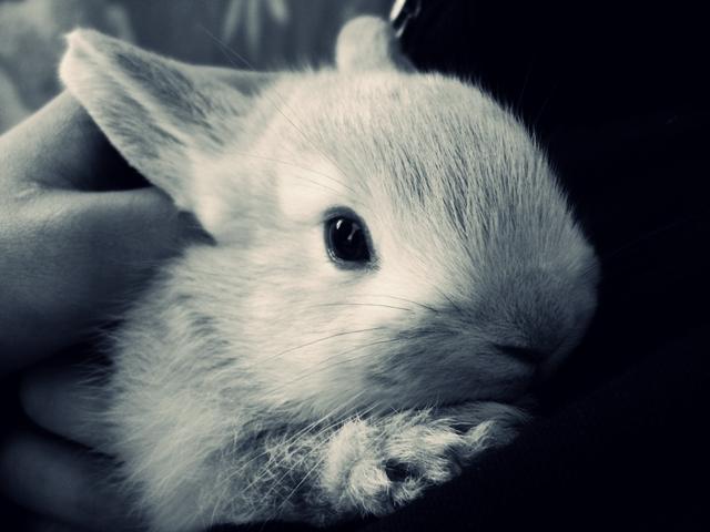 2010, 4-1 Daily Bunny