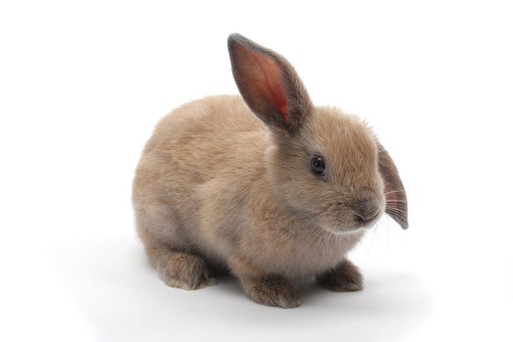 2010, 4-20.1 Daily Bunny