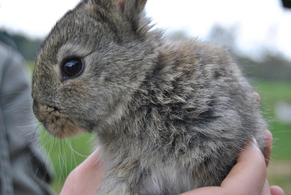 2010, 4-22 Daily Bunny