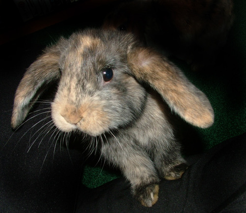 2010, 4-23 Daily Bunny