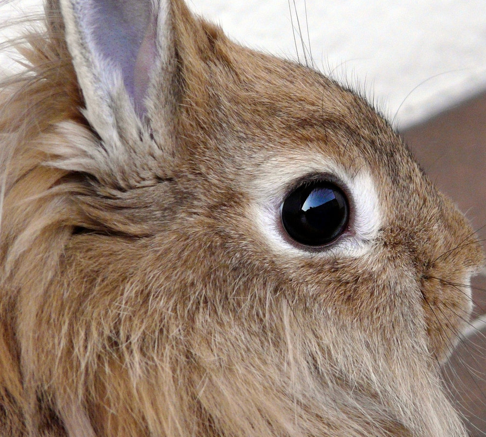 2010, 4-25 Daily Bunny