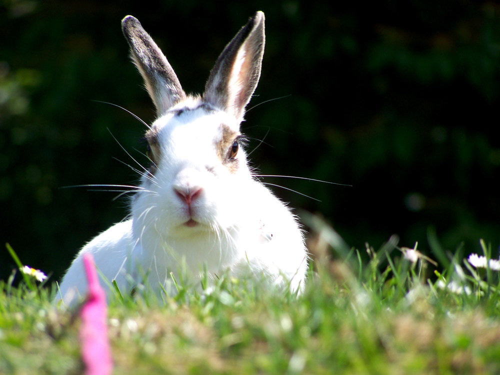 2010, 4-27 Daily Bunny
