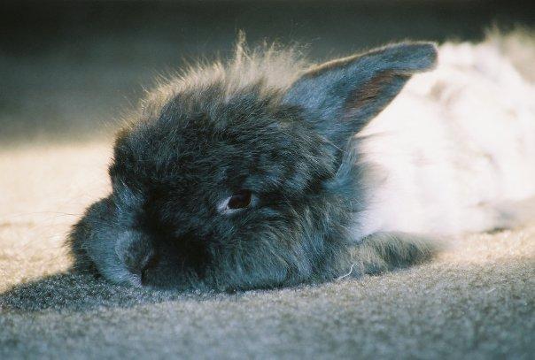 2010, 4-28 Daily Bunny