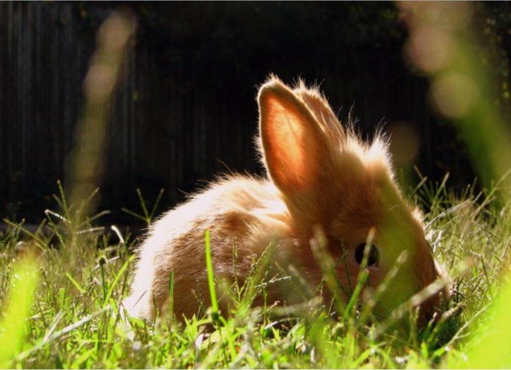 2010, 4-29 Daily Bunny