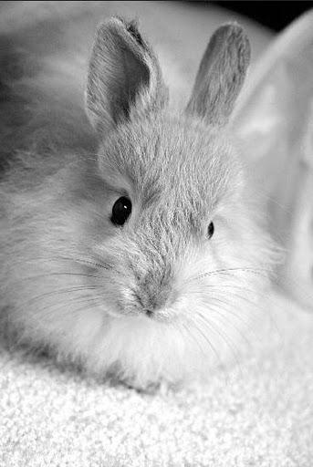 2010, 5-2 Daily Bunny