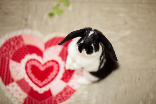 2010, 5-3 Daily Bunny