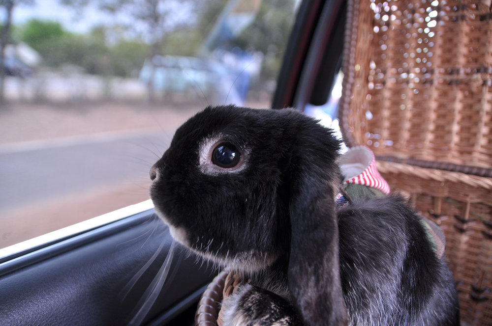 2010, 5-4 Daily Bunny