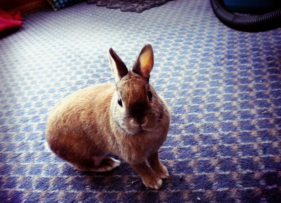2010, 5-5 Daily Bunny