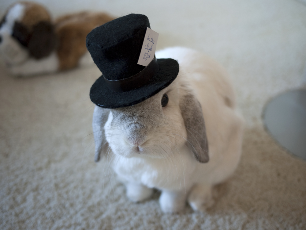 2010, 5-6 Daily Bunny