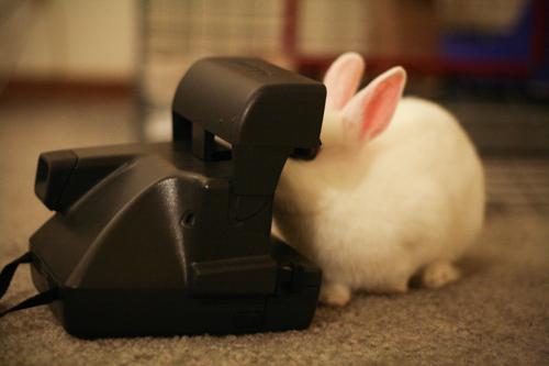 2010, 5-7 Daily Bunny