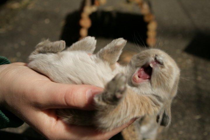 2010, 5-9 Daily Bunny