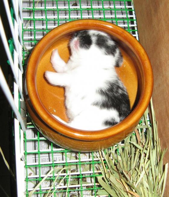 2010, 5-1 Daily Bunny