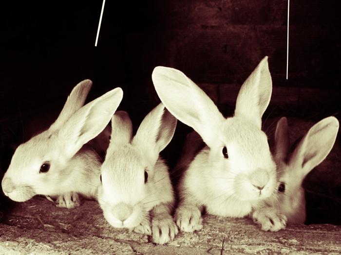2010, 5-22 Daily Bunny