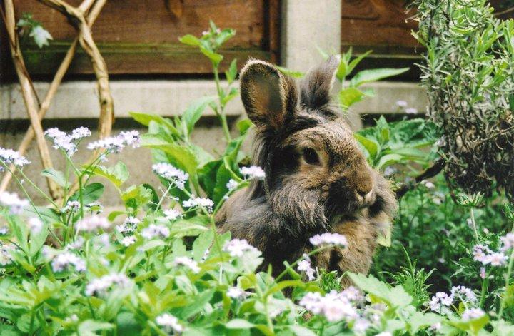 2010, 5-23 Daily Bunny