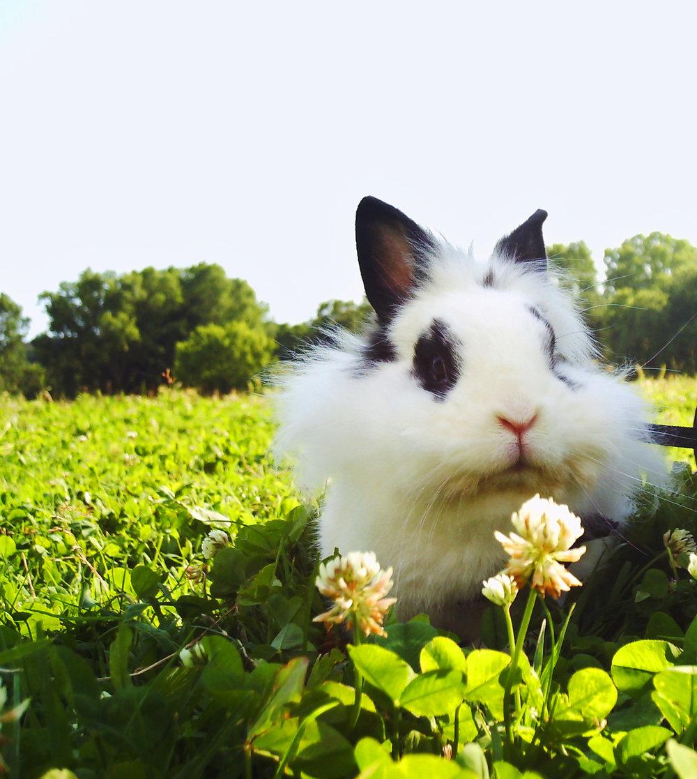 2010, 5-24 Daily Bunny