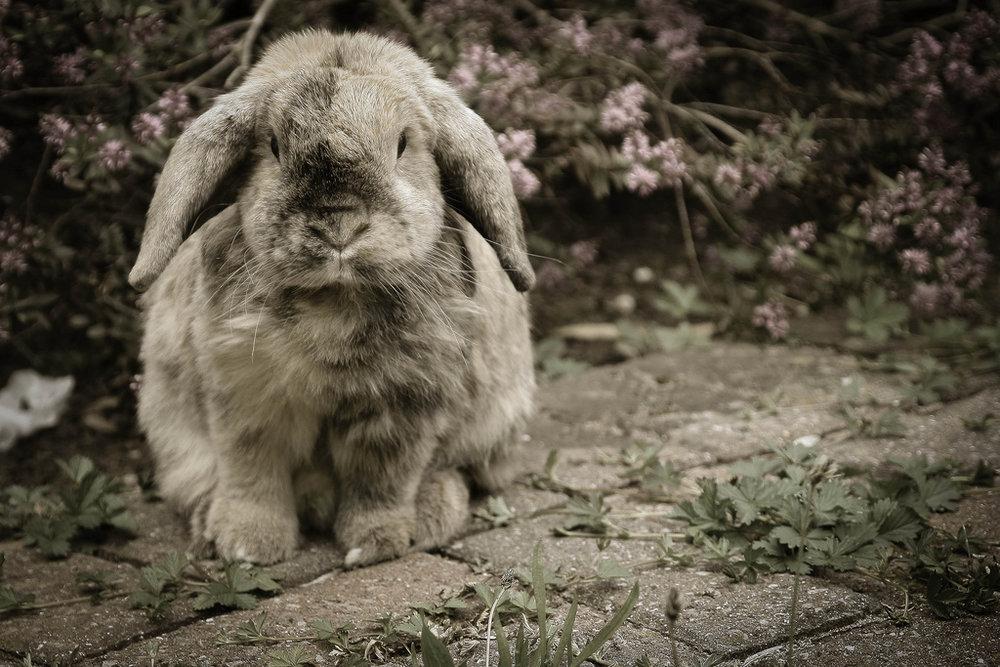 2010, 5-26 Daily Bunny
