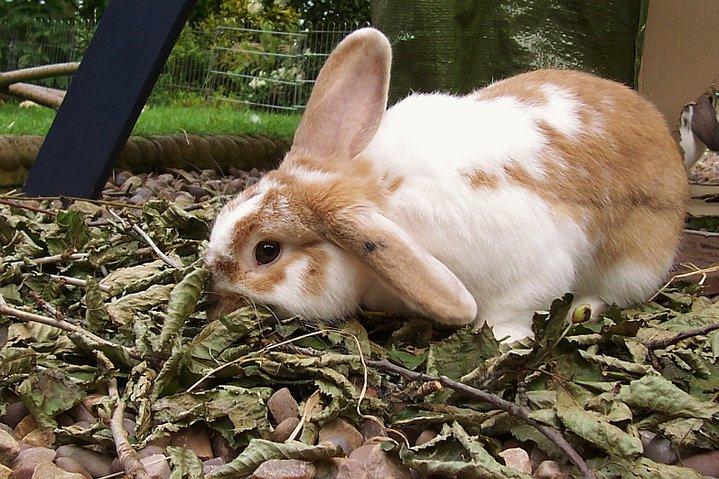 2010, 5-27 Daily Bunny
