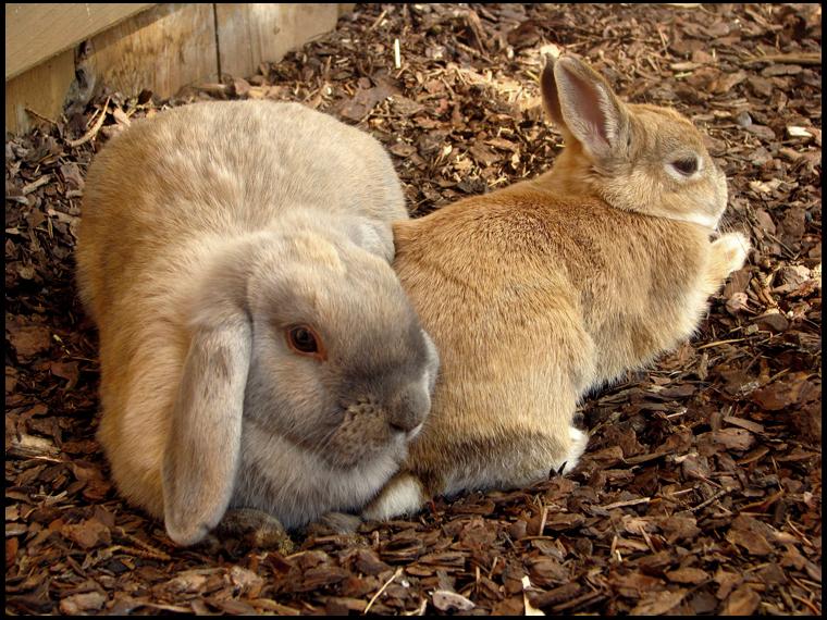 2010, 5-28 Daily Bunny