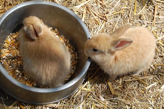 2010, 5-29 Daily Bunny