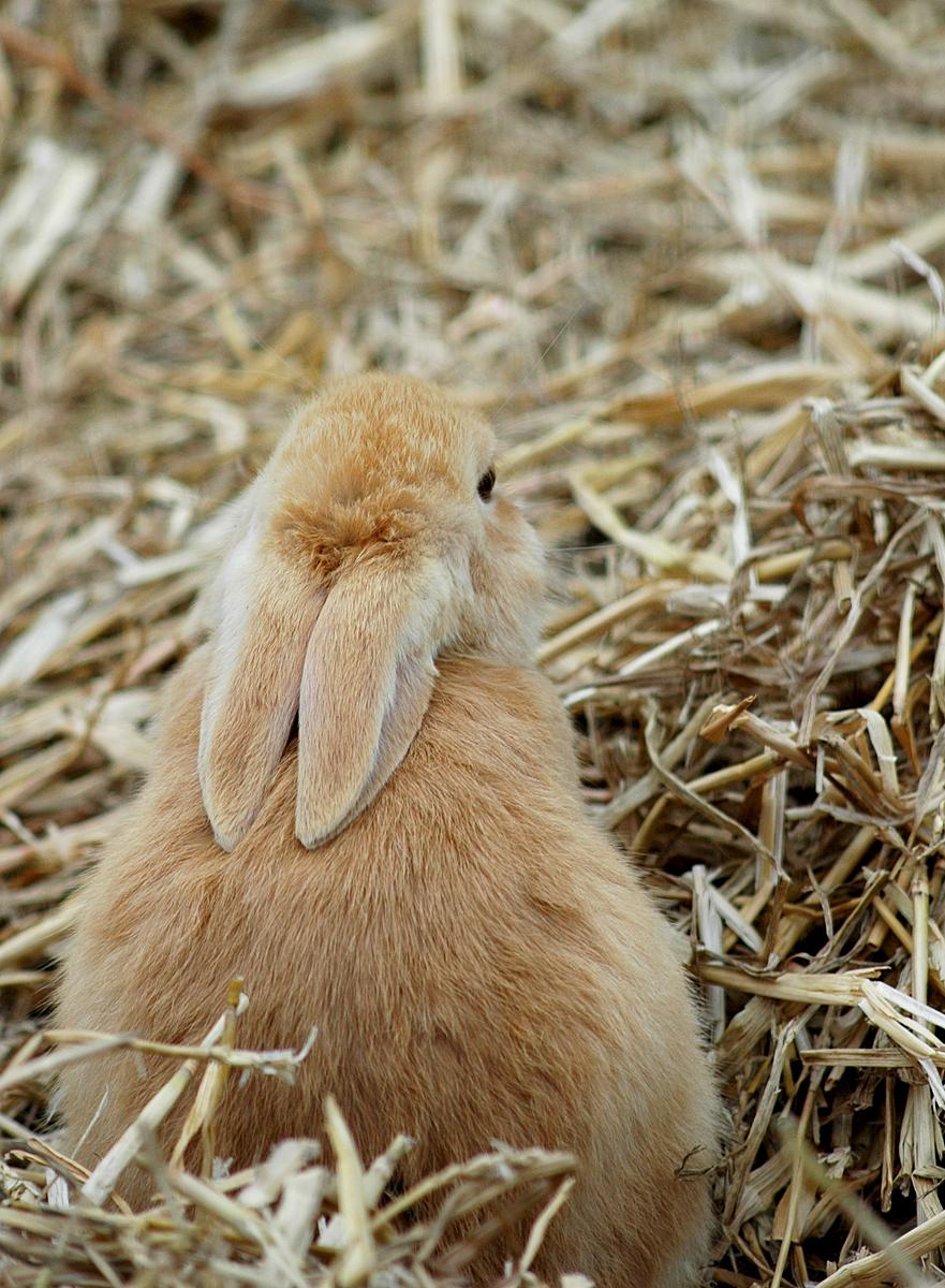 2010, 6-3 Daily Bunny