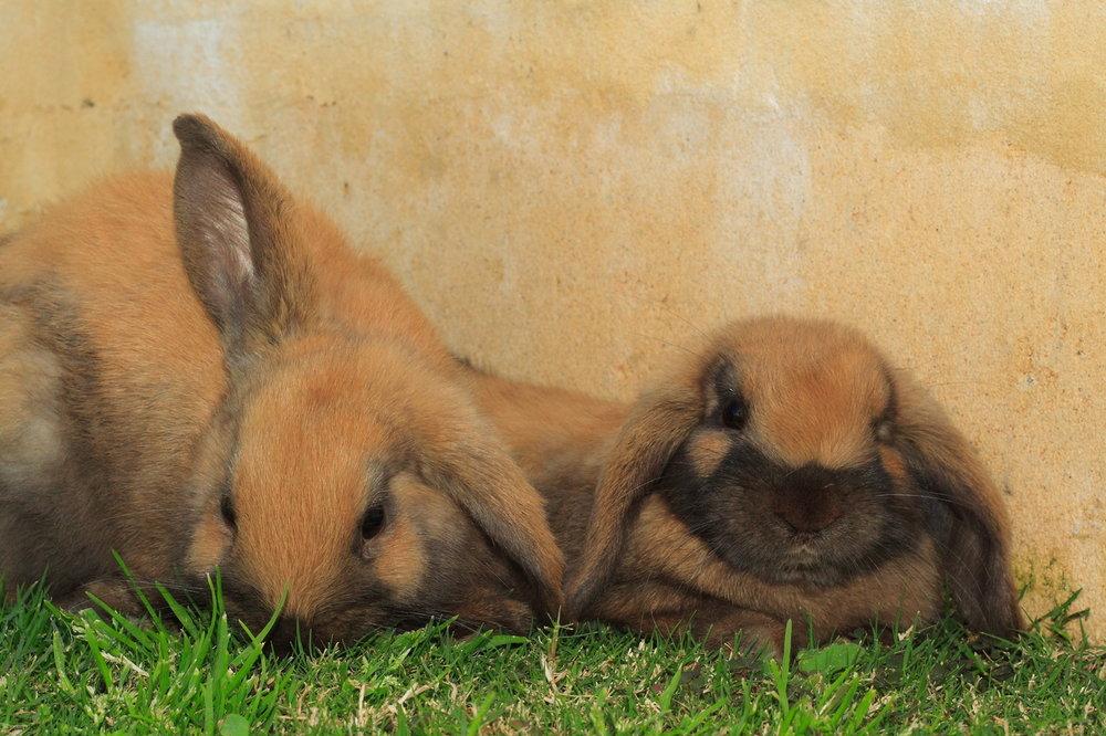 2010, 6-4 Daily Bunny