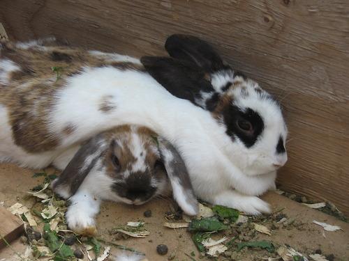 2010, 6-5 Daily Bunny