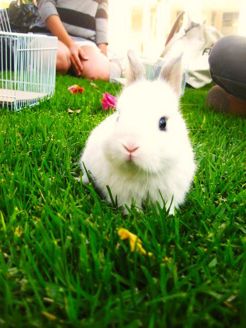 2010, 6-7 Daily Bunny
