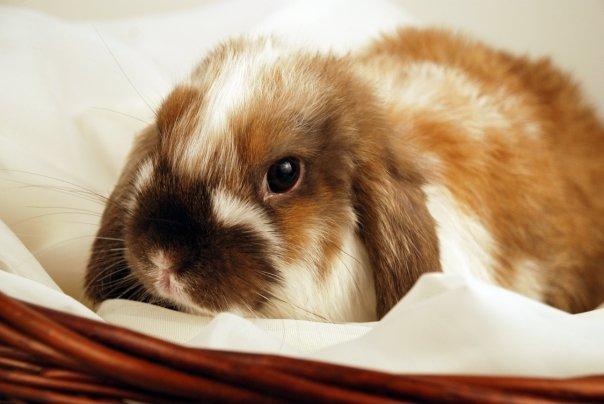2010, 6-9 Daily Bunny